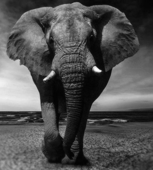 Elephant-2870777